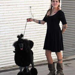Caniche gigante en campeonato de belleza