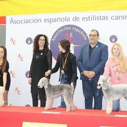 Plata con Talco a nivel europeo (Valladolid, 2017)