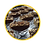 Thumbnail: Chocolate Turtle