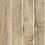 Thumbnail: HF963802 Cinnamomum