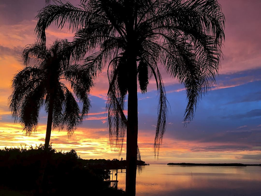 palm trees in the evening at Tampa, Florida