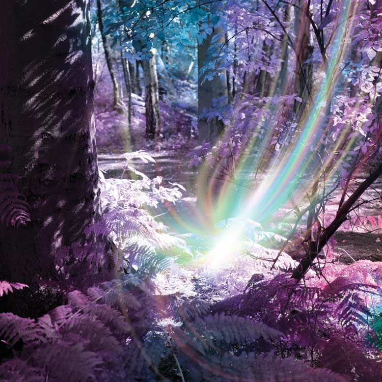 surreal photo of energy beams in the woods