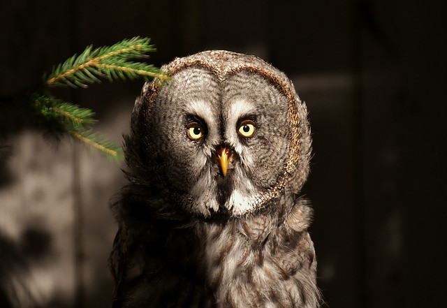 Beautiful Owl with piercing yellow eyes that feels like it is seeing deep within your sould.