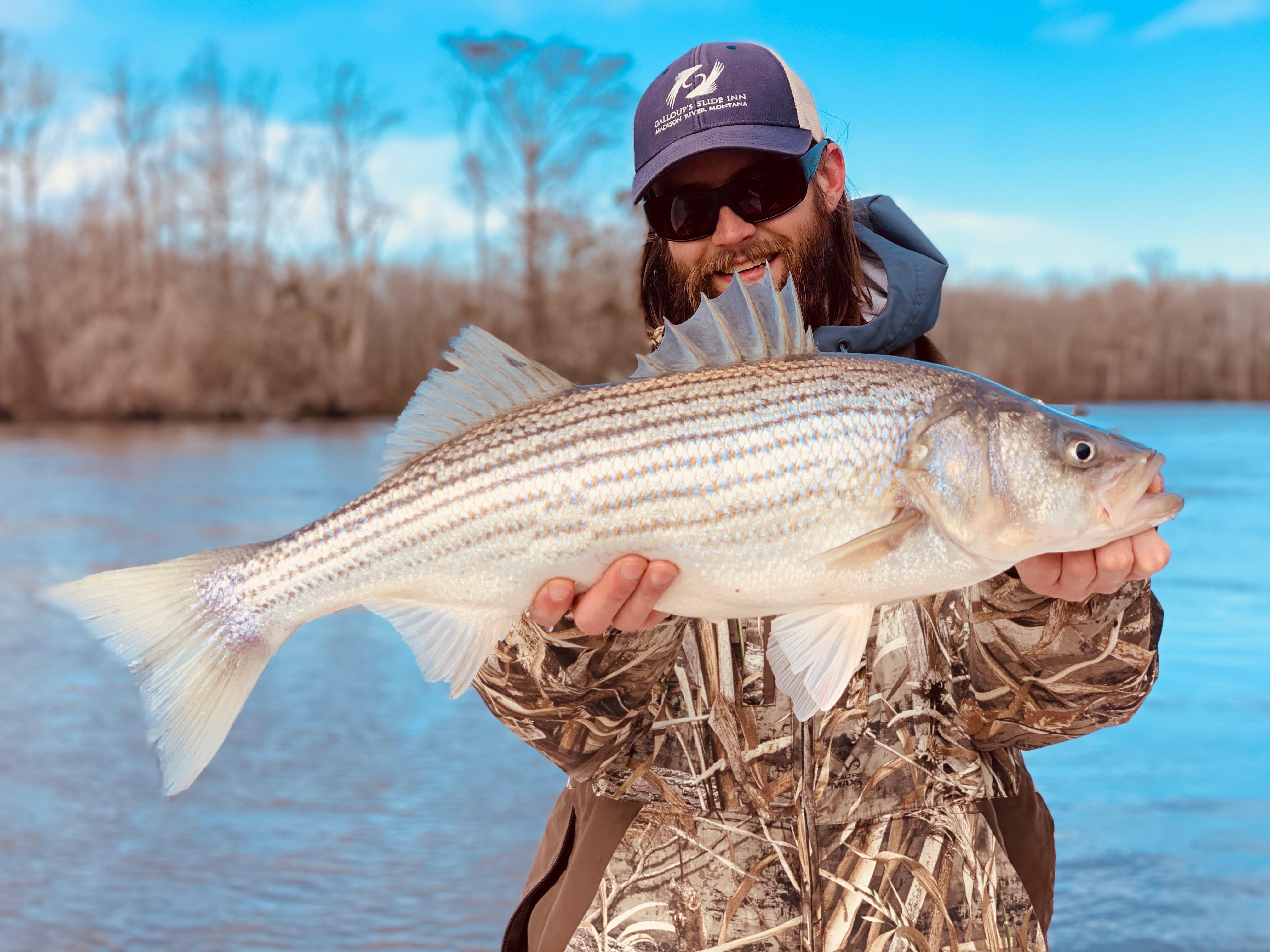 Winter Striped Bass
