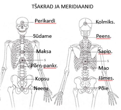 Tšakrad ja meridiaanid.PNG