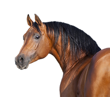 caballo.png