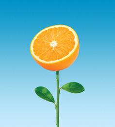 Mandarinų derlius
