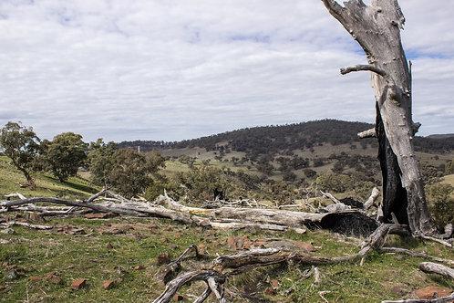 Southern Flinders Horricks Pass 3