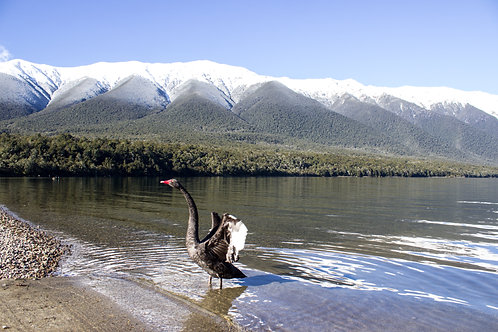 Lake Rotoiti #3
