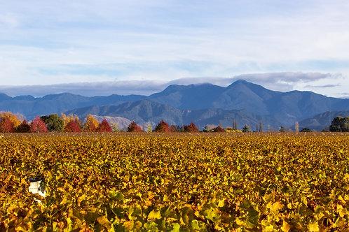 Marlborough in Autumn Colours 3