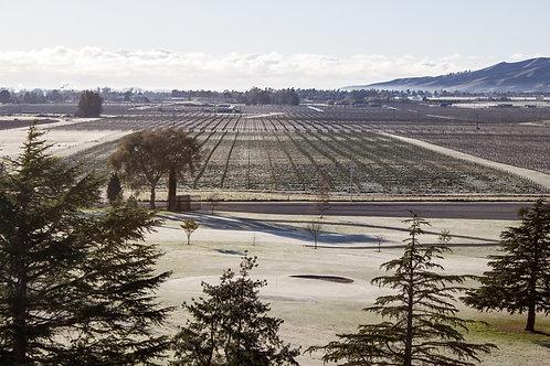Marlborough Golf Club Frost #1