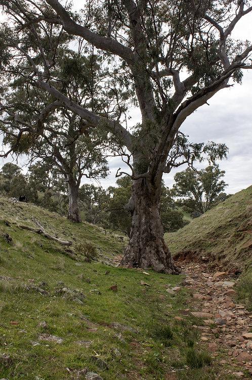Southern Flinders Horricks Pass