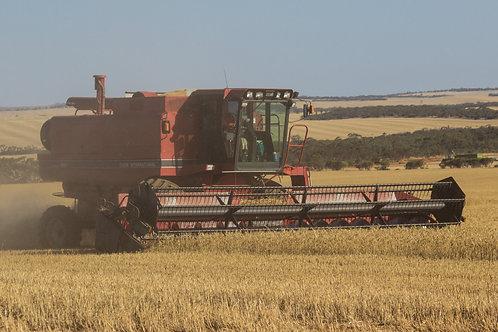 Buckleboo Harvest 2