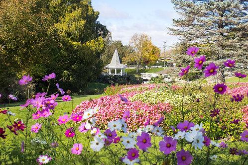 Pollard Park Spring Flowers