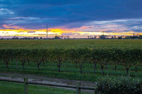 Sunrise over vines 2