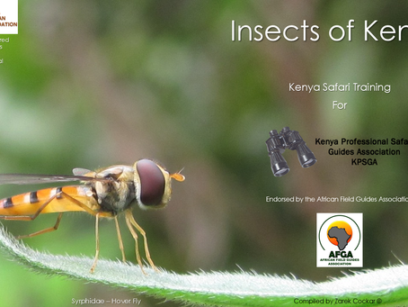 Online Insect Lecture
