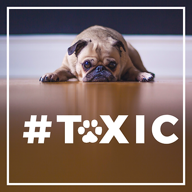 Toxic Substances and Pets