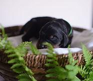 pes_zelený.JPG