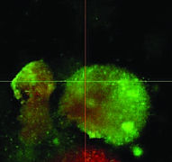 Biofilm pre-treatment with super-oxidised solution