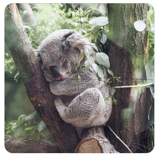 Koala Sleeping (4pc Jigsaw Drink Coasters)