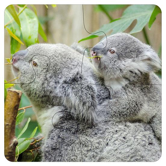 Koalas (4pc Jigsaw Drink Coasters)