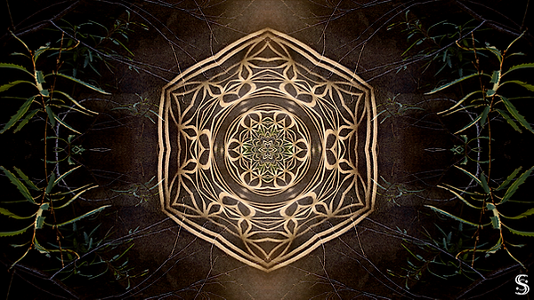 psychedelic bush edit 1.1watermark.png