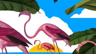 Raquel: La mamá flamingo