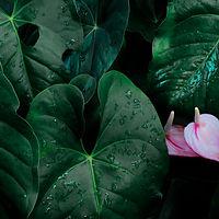 follaje-hoja-tropical-verde-oscuro-flor_