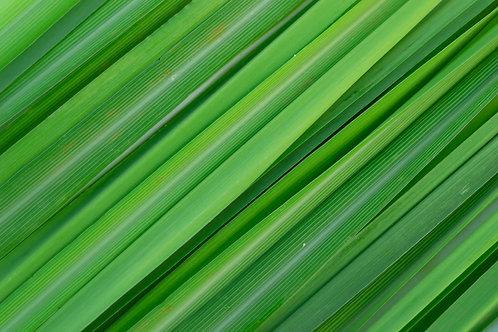 Coriander & Lemongrass