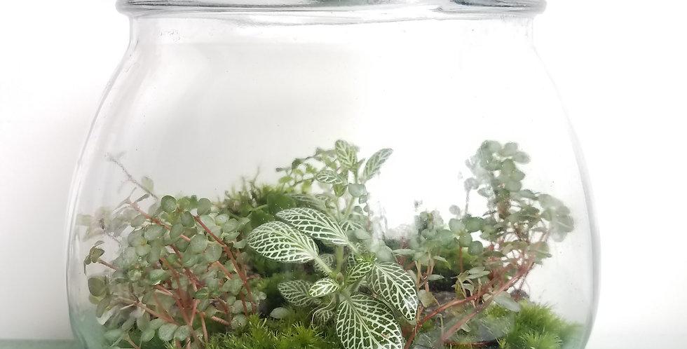 Gallon Jar Terrarium