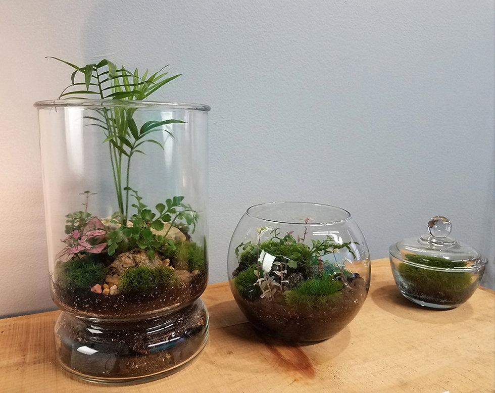 three terrariums.jpg