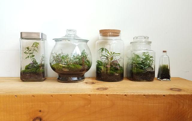 line of terrariums.jpg