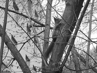 En god nabo :) #ekorn