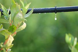 Sistema de riego y planta