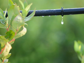 Water Policy Part IV: Communal Approaches To Water Management
