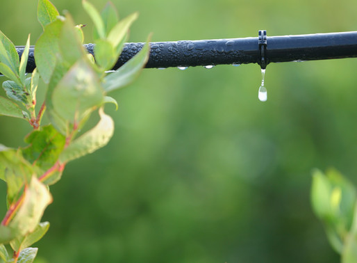 INVEST IN AN IRRIGATION SYSTEM TO SAVE WATER, TIME AND MONEY