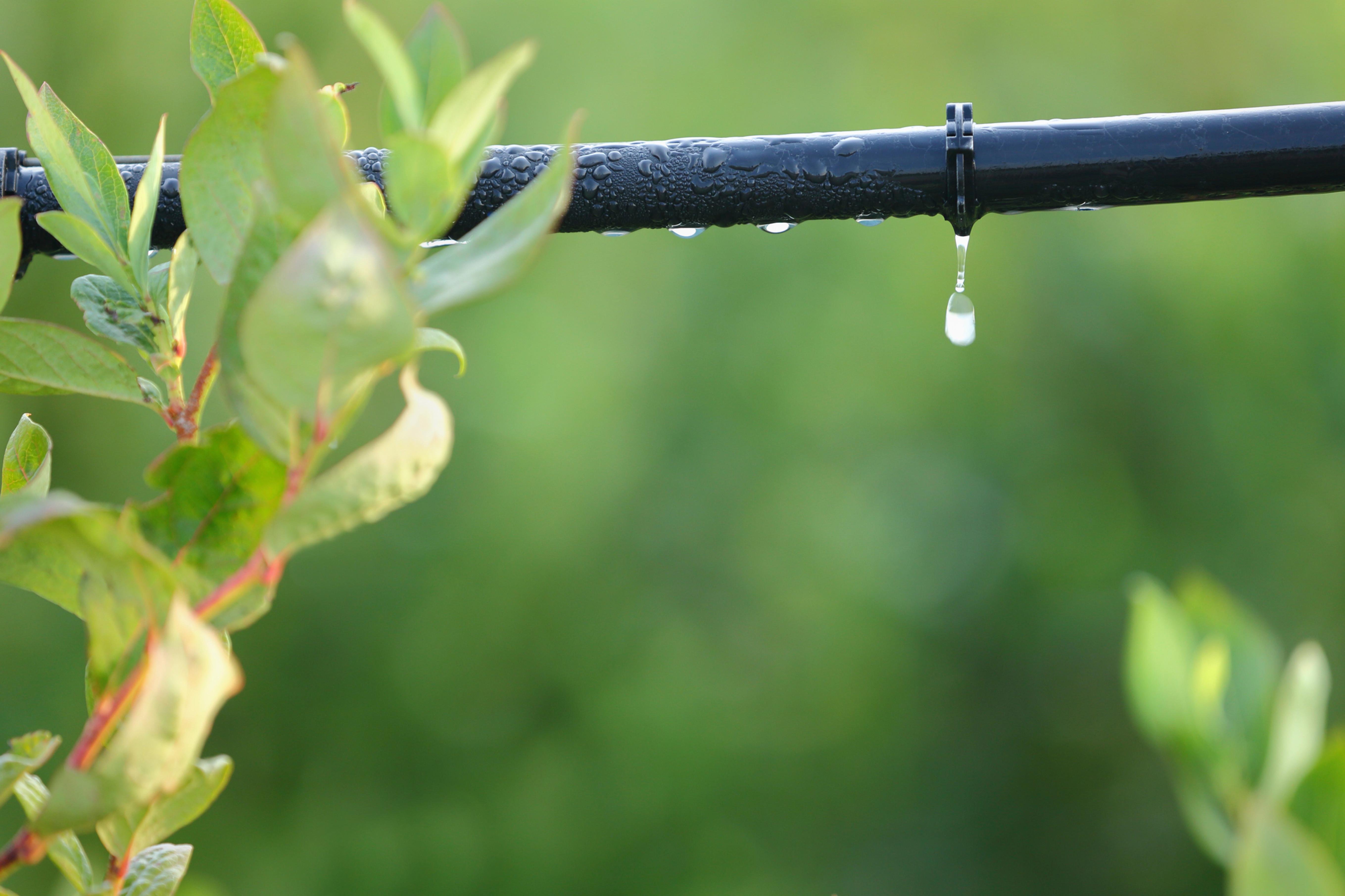 Projetos de irrigação.
