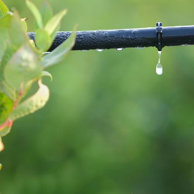 Plant Irrigation System