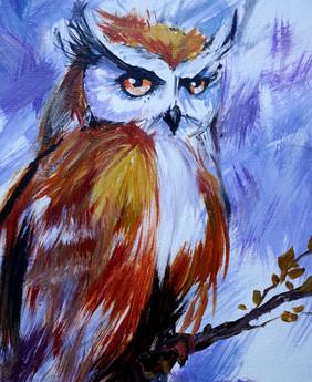 15 owl