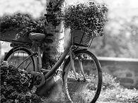 bike-3683405_1920.jpg