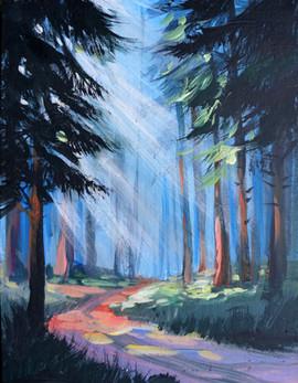 49 sunlit pines