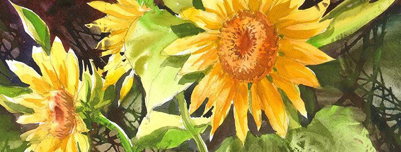 """Original Watercolor Demo """"Sunflowers #1"""""""