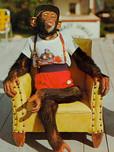 Chimp 1.jpeg