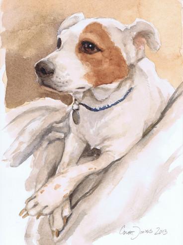 Albus Dumbledog
