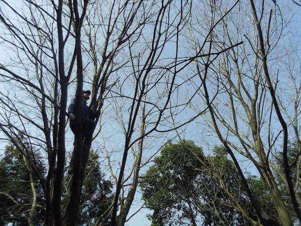 12木登り1.JPG