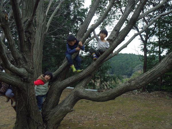 08木登り1.JPG