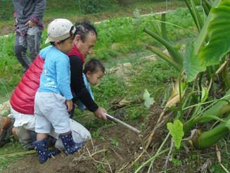 Let's harvest taro and carrots!