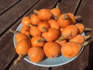 Delicious loquats! 美味しいびわ