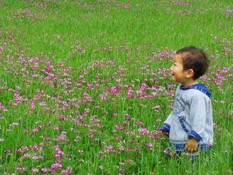 Catching butterflies in a lotus flower field