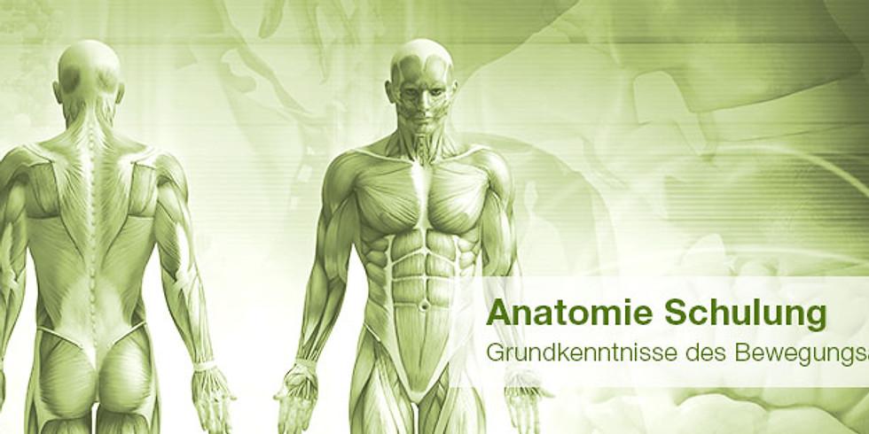 Anatomie für die Wellnessbranche
